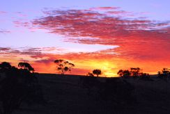 Sunrise, Barossa Valley, Australia
